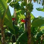 banani nel giardino