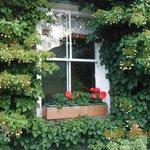 Hydrangeas & Geraniums  frame the windows.
