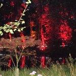 tree light up