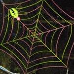 neon spider web