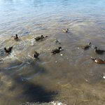 feeding the ducks from the veranda