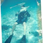 All Scuba Certifications levels Avaliable & Guided Dives