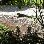 Some of the wild life around Waltini's