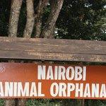 Animal Orphanage, Main Gate