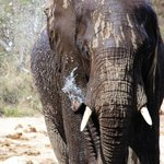 Elephant at the water hole