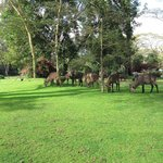 water buck grazing in the grounds