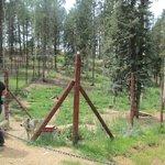 Wolf enclosures