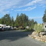 spacious camping sites with flowers and grape arbors between