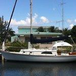 New Day Sailboat Dolphins Stingrays