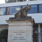 orso simbolo della città
