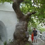 Big tree!