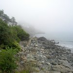 View of beach area in fog