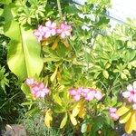Shrubs in Flower