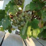 grapes in entranceway