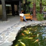 The Koi pond on the hotel site.