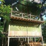 big jungle house..