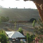 View from a room onto the horse farm