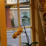 Orchid in the parlor