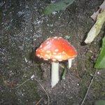 Hermoso hongo pero peligroso!!