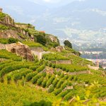 views of the Lavaux Terrasse