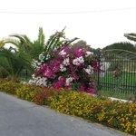 Ухоженный сад в отеле