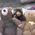 the Bears found a new friend !!