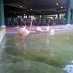 Flamingoes in the lobby area.