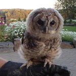 Owl Rescue at JW Marriott