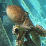 Octopus in the resort lagoon