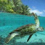 Turtle sanctuary which was unbelievable