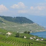 views of vineyards and Montreux
