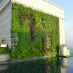 Living wall by the pool