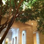 Indoor trees in the IM Pei Lobby