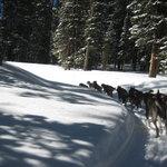 monarch dog sled ride