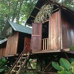 Close up shots of the tree houses