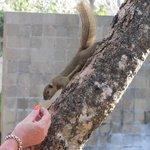 And wildlife to entertain