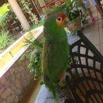 pappagallo nella hall