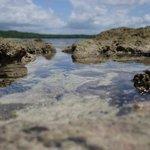 rockpool low tide