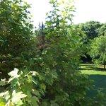 vue de la chambre sur le parc