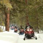 Cruising through the woods by the Telluride Ski Resort