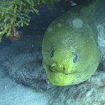 up close with a moray eel