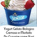Yogurt Gelato Freschissimo da Personalizzare