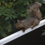 Crazy squirrel outside our window