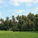 Surroundings of Wayan Village