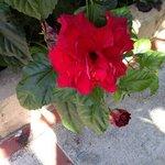 Flores de la posada