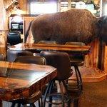 Full size buffalo mount