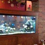 Great Fish Tank!