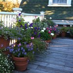 Flowers on roof deck