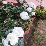 Flowers in the garden..
