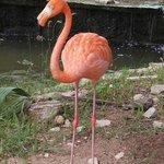 Flamingo im Hotelgelände